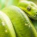 Snake Eyes by Thomas Hawk