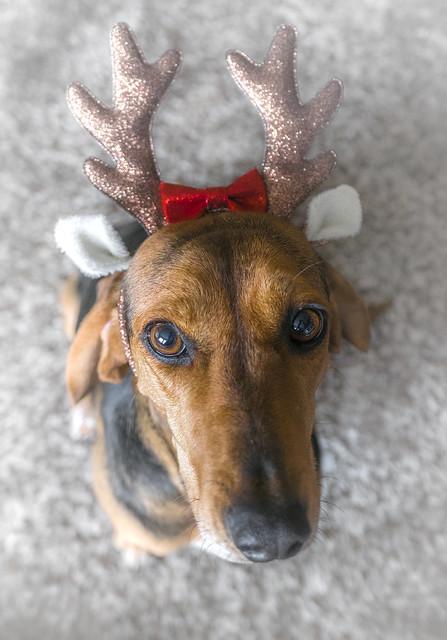 our reindeer...