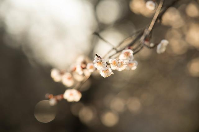 Photo:DSC_0294.jpg By Pafuxu