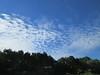 nuages sur le bois de pin de Kerfany