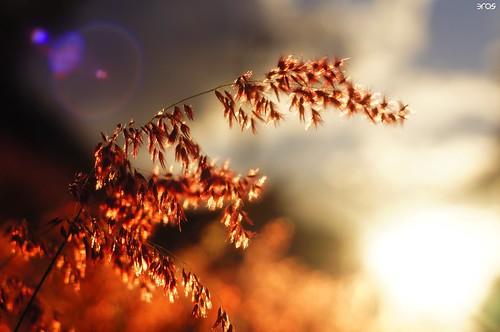 sunset close sonya55