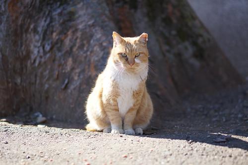 宝幢寺の猫