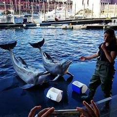 """Did you say """"fish""""?!? 😃 #genova #acquariodigenova #dolphins #dolphinshow #italy #placetovisit #tw #summertime #weekend"""