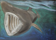 Mr Hunt: Save Our Seas, Day 6 - Basking Shark