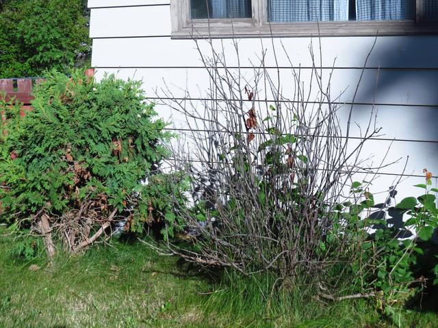 My Northern Garden 2015
