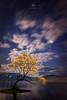 The Lone Wanaka Tree