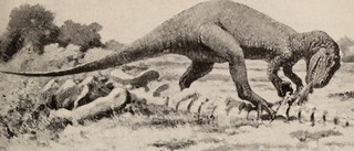 "Image from page 72 of ""The dinosaur book : the ruling reptiles and their relatives"" (1951) 