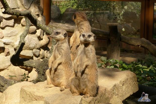 Tierpark Perleberg 09.08.2015 187