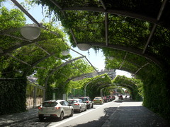 Planting canopy over street