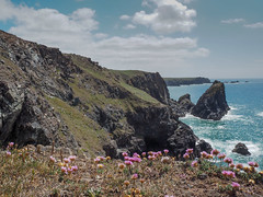 Kynance Cove with Sea Thrift