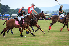 stick and ball games, animal sports, equestrian sport, sports, stick and ball sports, polo, team sport, ball game,