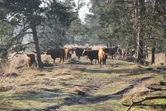 Hertogenpad_LAW13_NL_Wandelen_d8_4