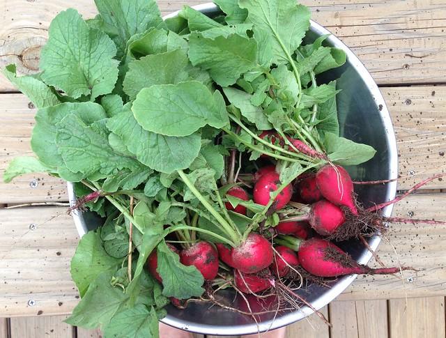 Spring Garden Snack Radishes