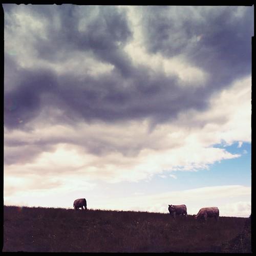 summer skies 2015 - day 5: Dundonald Hill