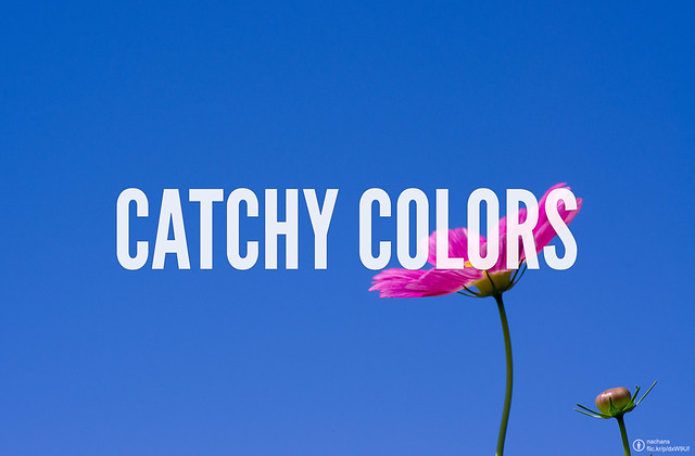 Catchy Colors