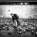 THE PIGEONS WHISPERER by Mohsan'