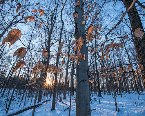annarbor backlight leaves light michigan snow sunrise trees winter woods