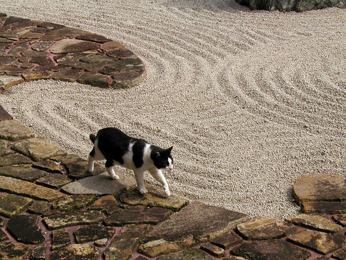 cat in temple (Zen cat)