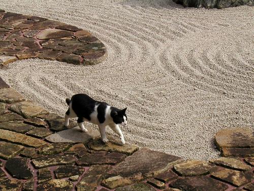 cat in temple (Zen cat)