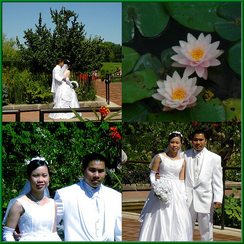 At The Chicago Botanic Garden Wedding Photos Frequently