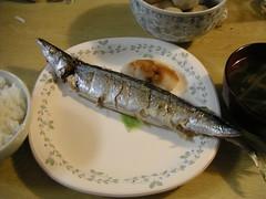 秋刀魚 sanma / Pacific saury