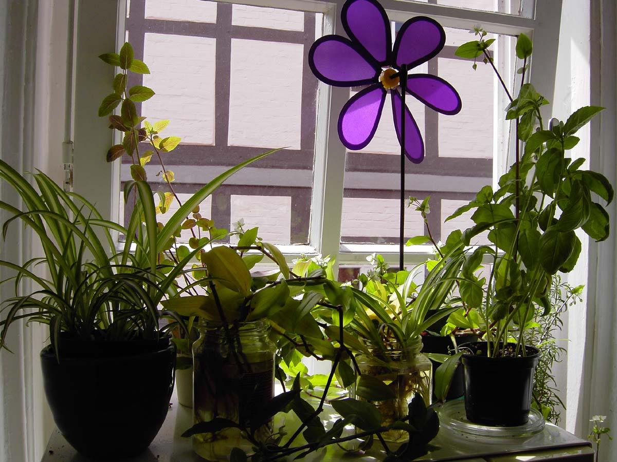 kr uter und andere pflanzen auf der fensterbank kitchen. Black Bedroom Furniture Sets. Home Design Ideas