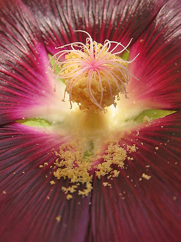 hollyhock's secrets