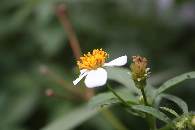 Wild Flowers 野草的花