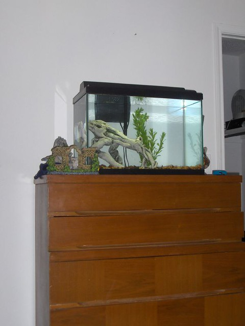 My New Fish Tank My new 20 gallon fish tank. There will be ...