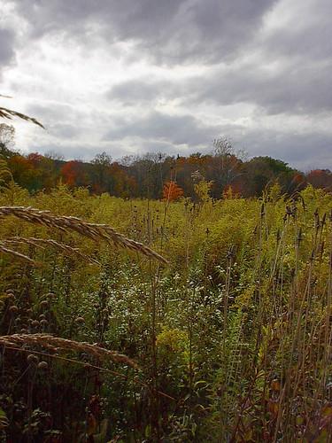 park autumn trees columbus ohio meadow slaterun columbusohioparks