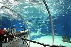 Befriend with the marine creatures at Shanghai Ocean Aquarium - Things to do in Shanghai