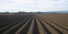 geometry farm