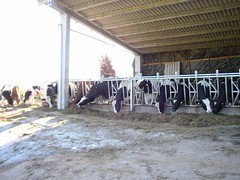 dairy, stall, stable,