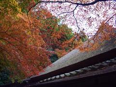 京都 嵐山 祇王寺