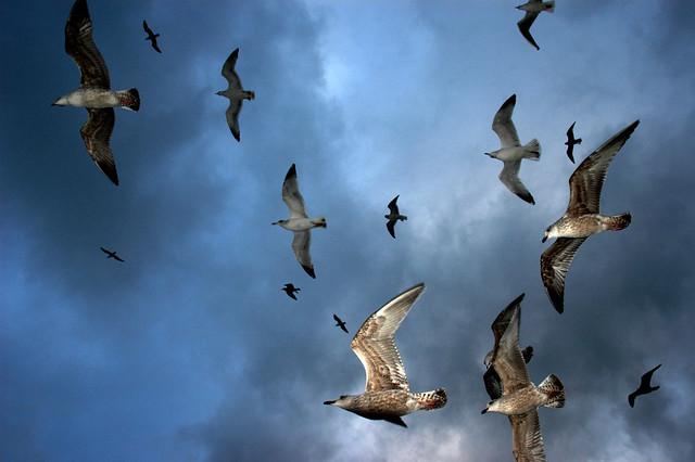 Storm sky rats...