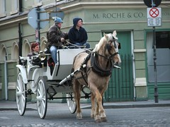 vehicle(1.0), transport(1.0), pack animal(1.0), coachman(1.0), horse(1.0), horse harness(1.0), horse and buggy(1.0), land vehicle(1.0), carriage(1.0), cart(1.0),