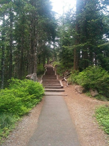 Lots of steps to head to the top of Sherrard Point, the best observation point atop Larch Mountain.
