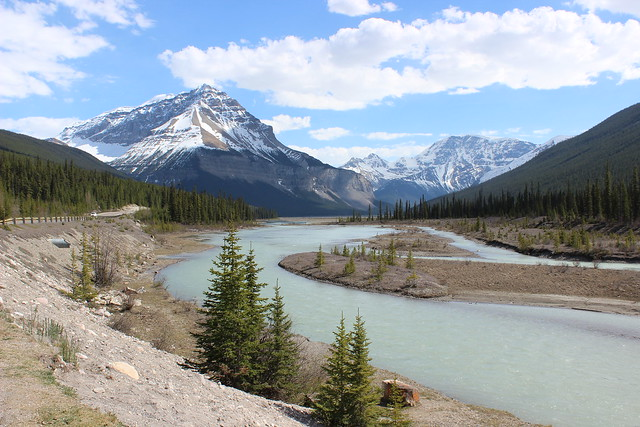Sightseeing on Icefields Parkway (Highway)