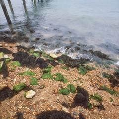 Seaweeds by Sam Salek