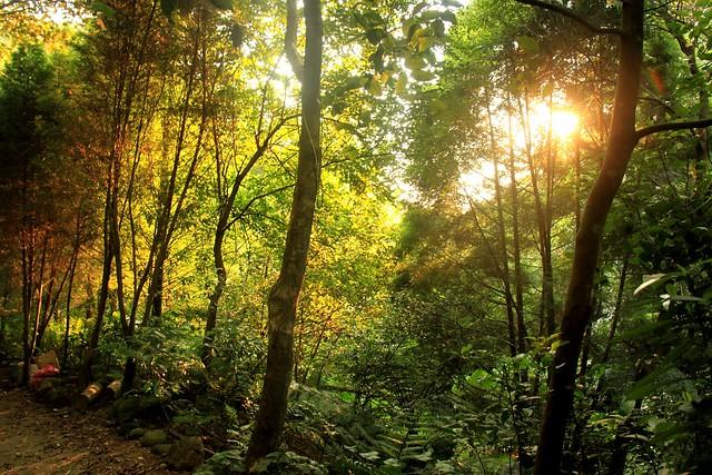 新竹自然谷環境信託基地木屋前步道景色。圖片來源:台灣環境資訊協會