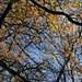Autumn on Lewesdon Hill