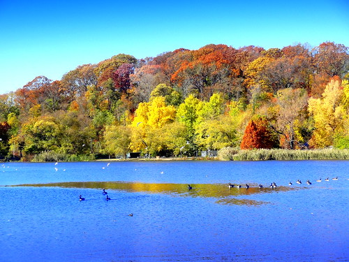 newyork brooklyn dmitriyfomenko image sky trees foliage prospectpark autumn fall lake bird