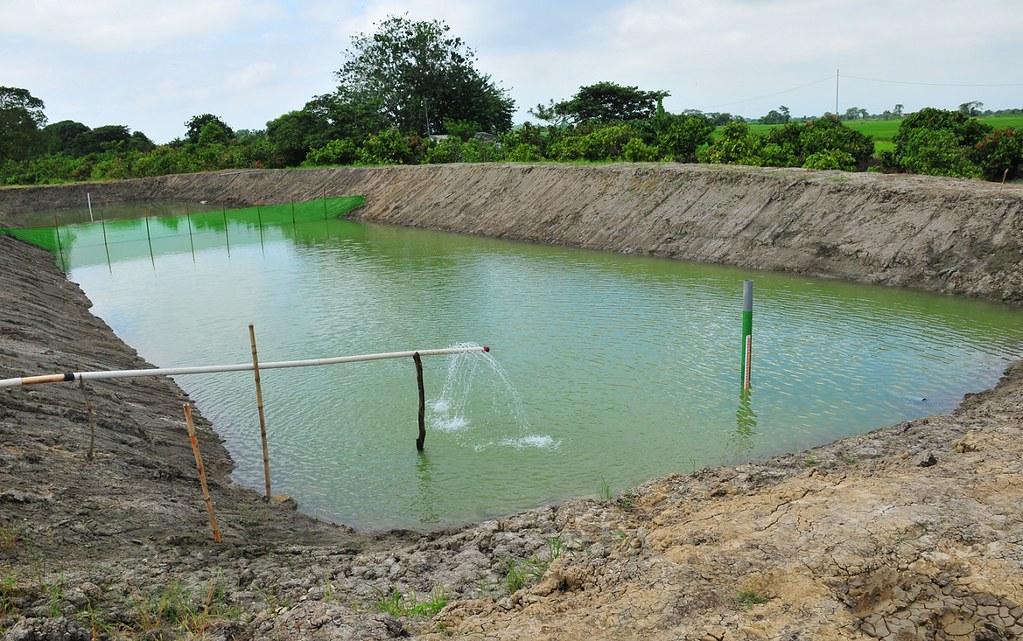 Avanza satisfactoriamente proyecto pisc cola implementado Estanques para piscicultura