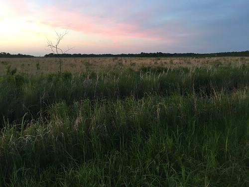 minnesota landscape us scenery unitedstates habitat aitkincounty