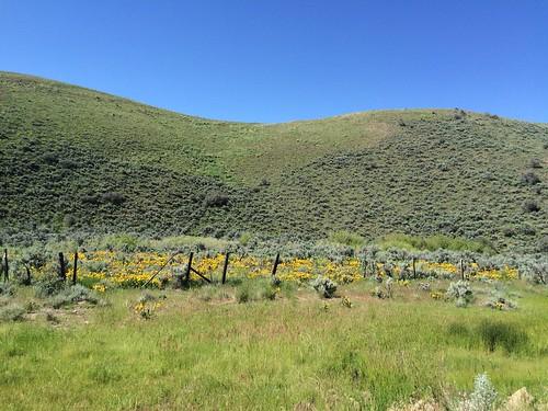 county flowers nevada wildflowers middleofnowhere elkocounty midasroad