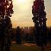 Gijón entre los árboles