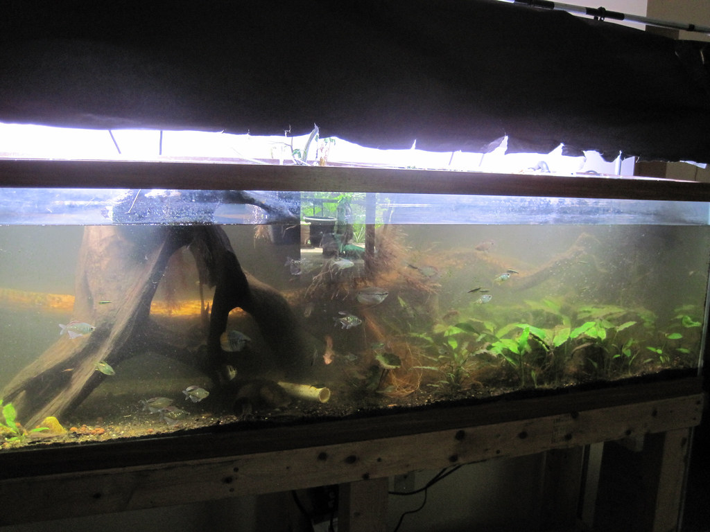 Oblique angle of the same aquarium as above