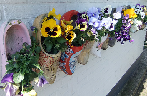 Wooden shoe planters filled with pansies in Marken, Holland