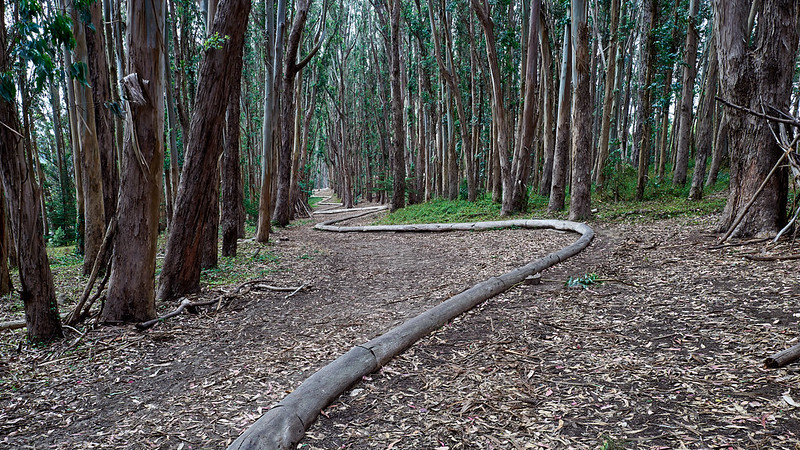 Presidio - Andy Goldsworthy's Wood Line