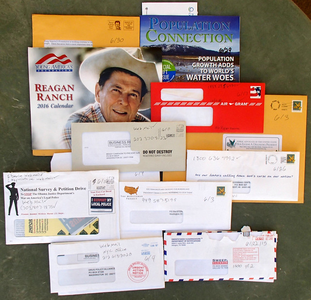 All 11 pieces of junk mail for the month of June